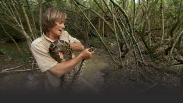 Austin holds onto a large python, head in hand, while standing in swamp.
