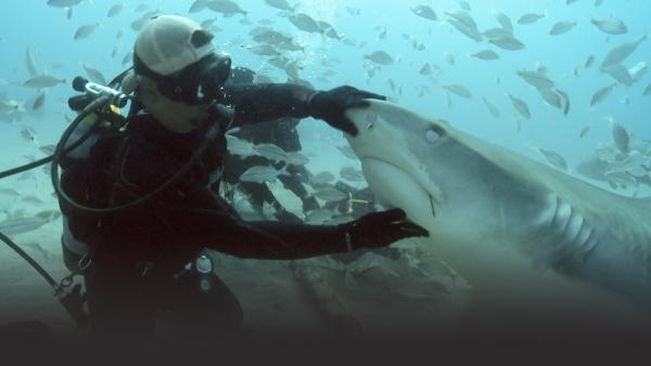 Man petting shark