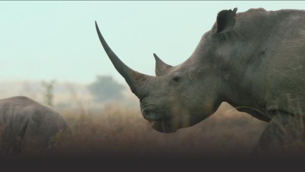 Rhino on the plains