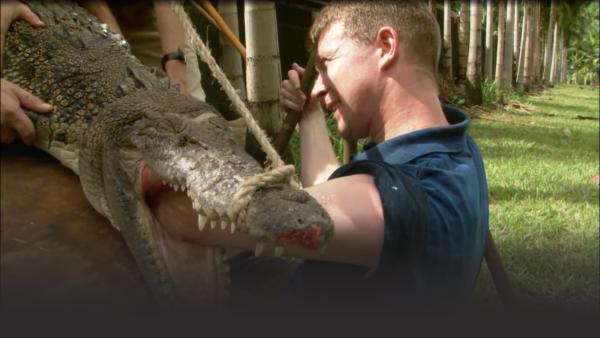Man sticks entire arm into the mouth of a crocodile