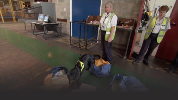 Sniffer Dog Lucy picks out a suspicious package.