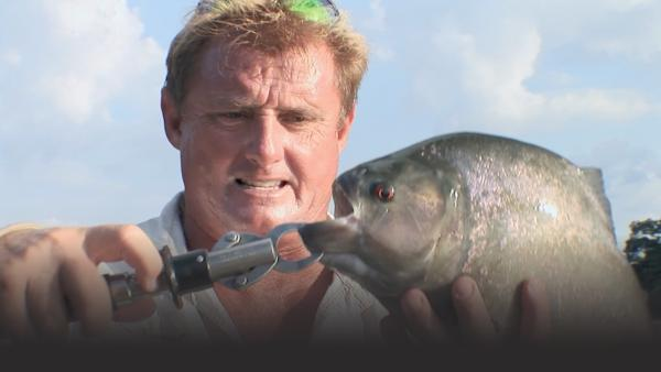 Steve holds a giant black piranha