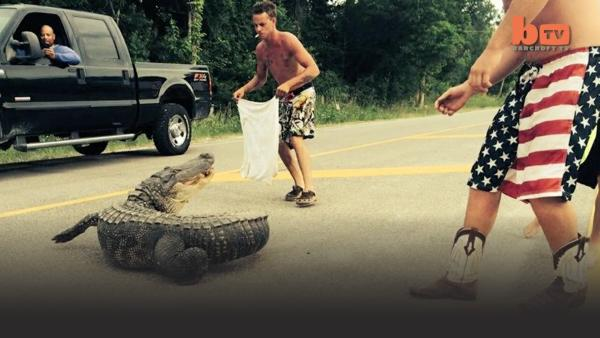 Good Samaritans try to get an alligator out of the road