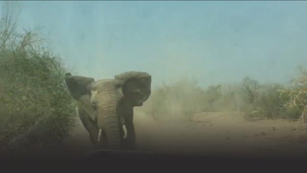 Tour Truck Gets Chased by Elephants