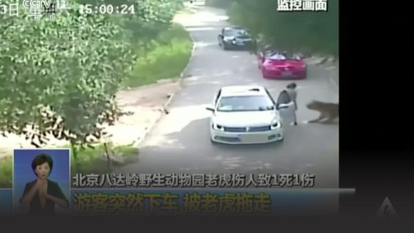 Tiger attacks woman tourist