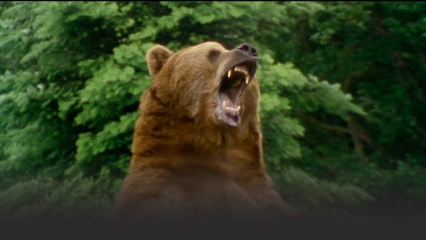 Bear stands on hind feet and roars
